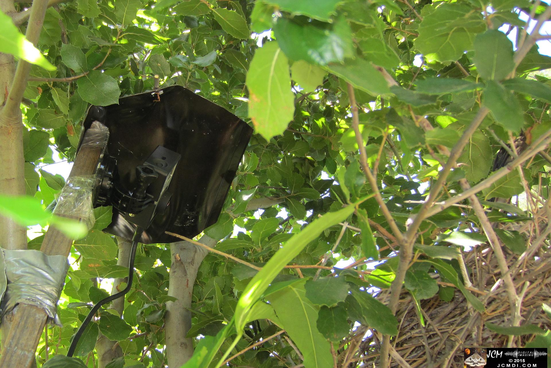 home-made GoPro wildlife camera rig and nest